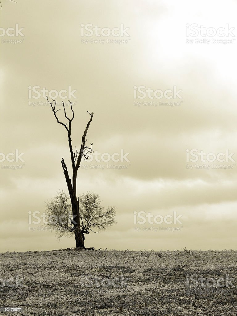 Lonely Winter Tree royalty-free stock photo