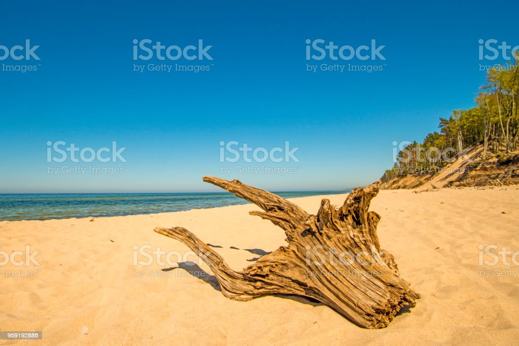 lonesome beach with driftwood and blue sky stock photo