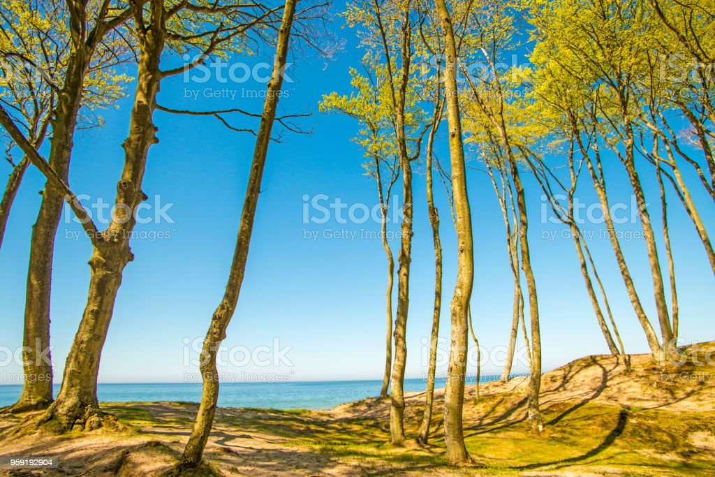 lonesome beach with trees and blue sky stock photo