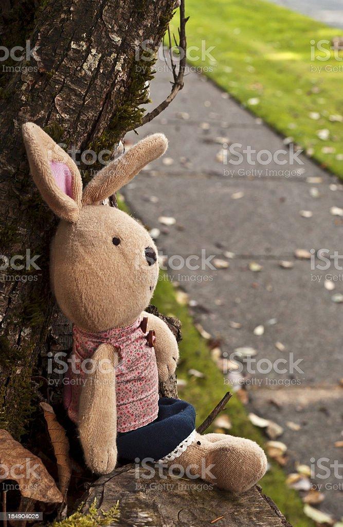 Lonesome Bunny royalty-free stock photo