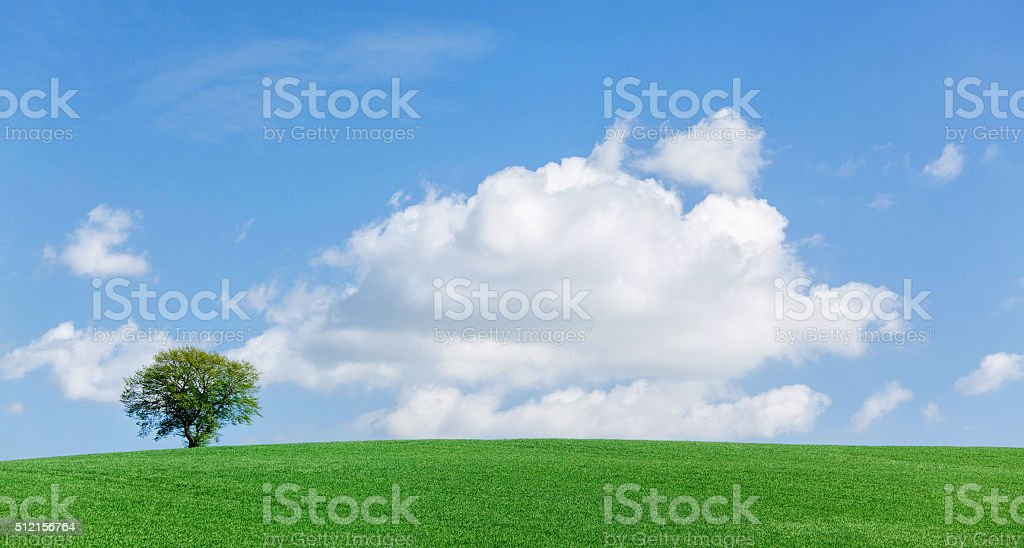 Lonesome single tree on meadow with majestic cloudscape stock photo