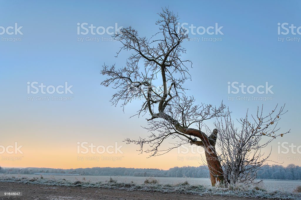 Lonesome tree countryside in winter at dawn (XXL) royalty-free stock photo