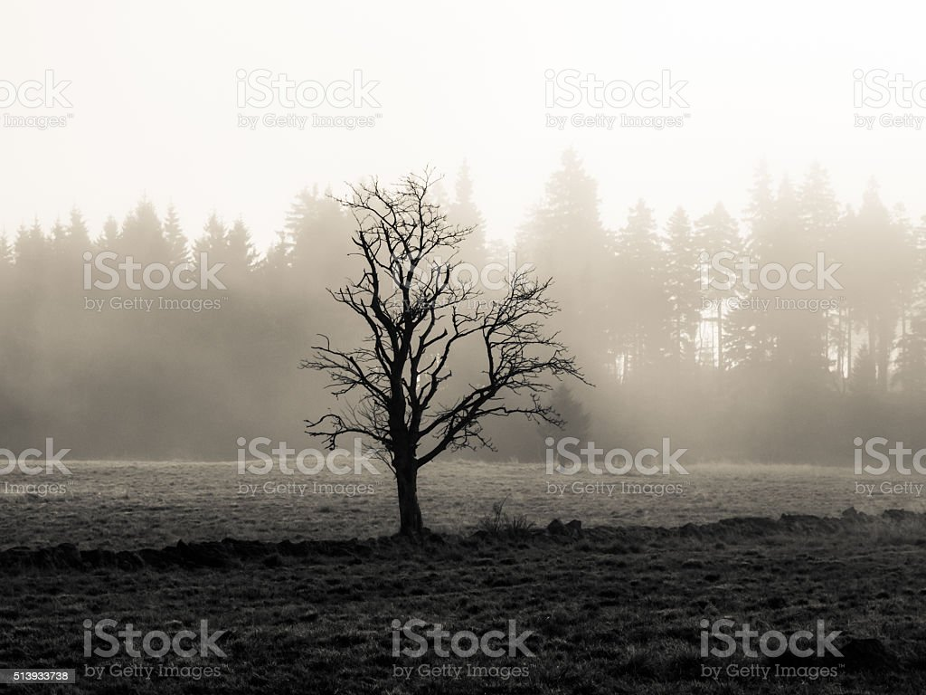Lonesome tree in misty autumn landscape stock photo