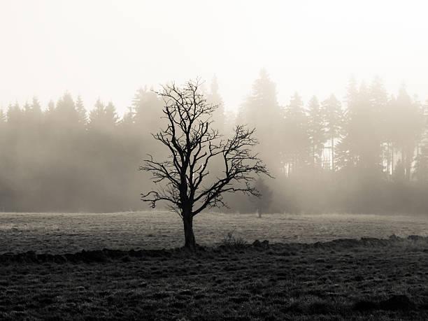 arbre dans le paysage brumeux d'automne - Photo