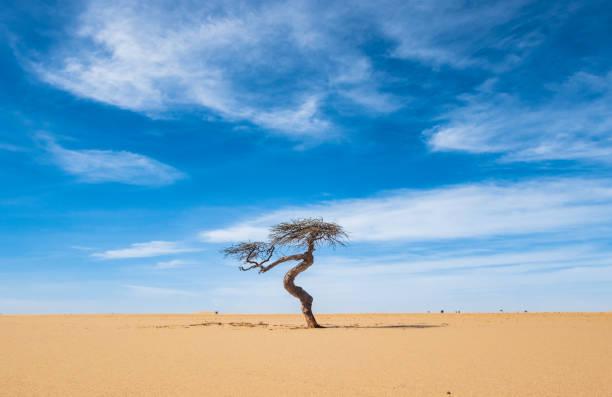 Lonesome tree in the desert stock photo