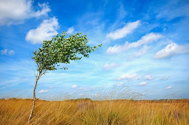See Lonesome Baum im wind – Foto