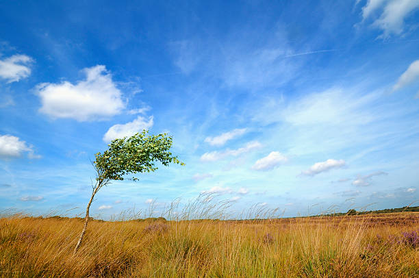 See Lonesome Baum Berauscht vom wind – Foto