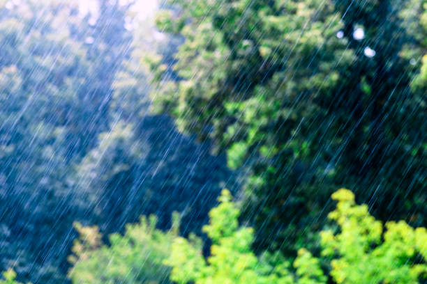 long and fast rain drops falling in green forest at sunny and windy conditions stock photo