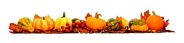 long autumn border of pumpkins, gourds and leaves - gourd stock photos and pictures