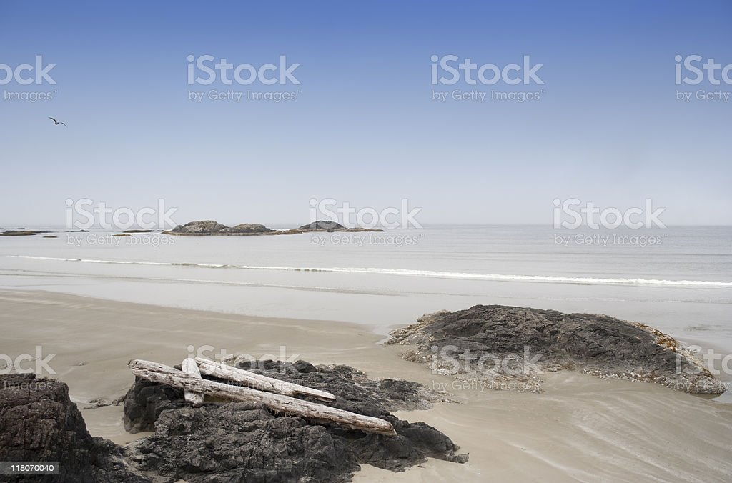Long Beach with Driftwood and Rocks royalty-free stock photo