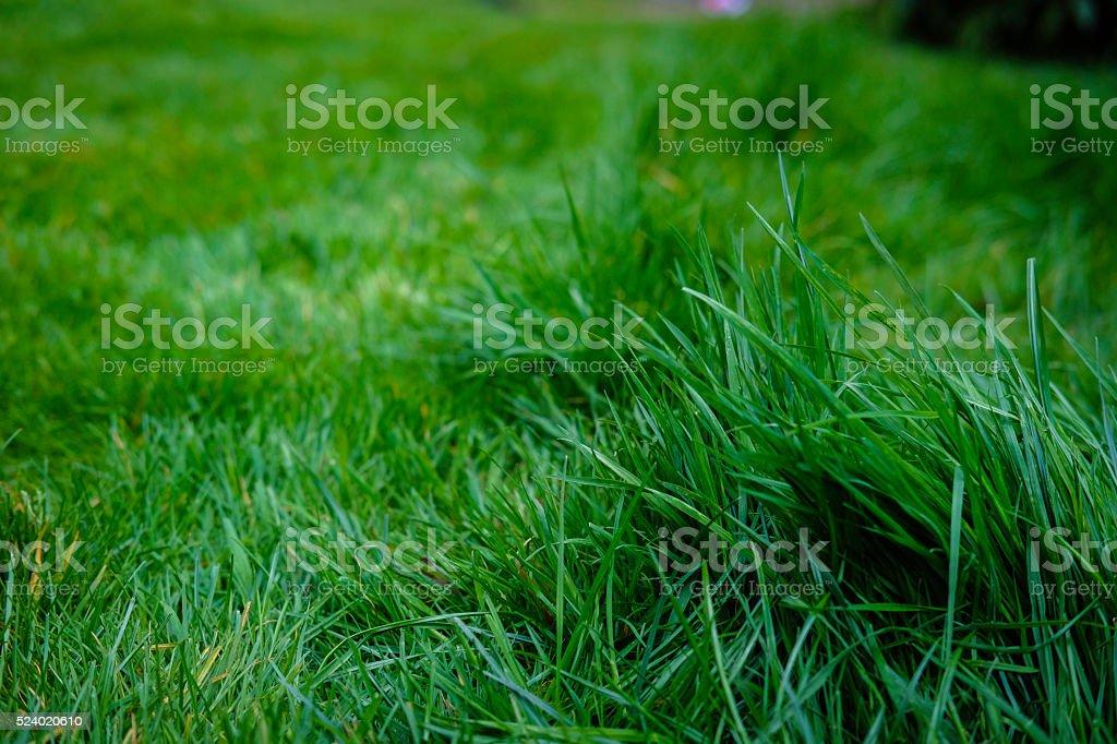 Long blades of Grass. A job to do stock photo