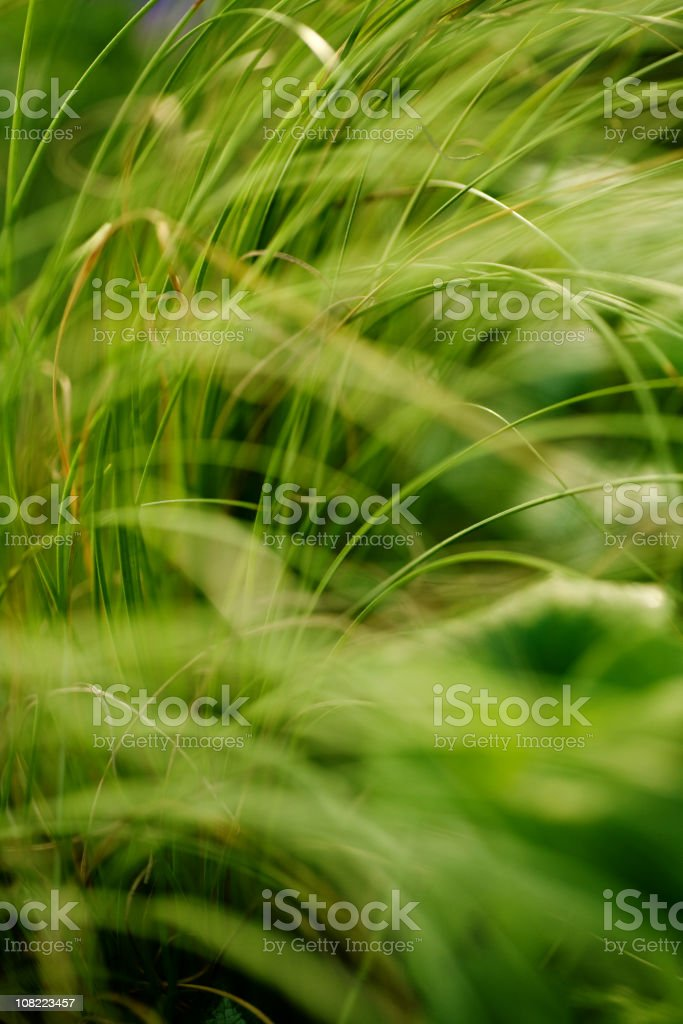 Long Blades of Green Grass royalty-free stock photo