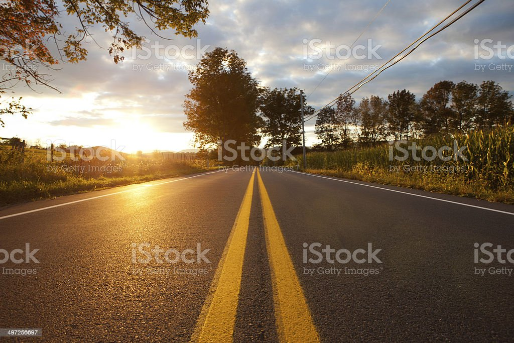 Long country road at sunset surrounded by corn fields stock photo