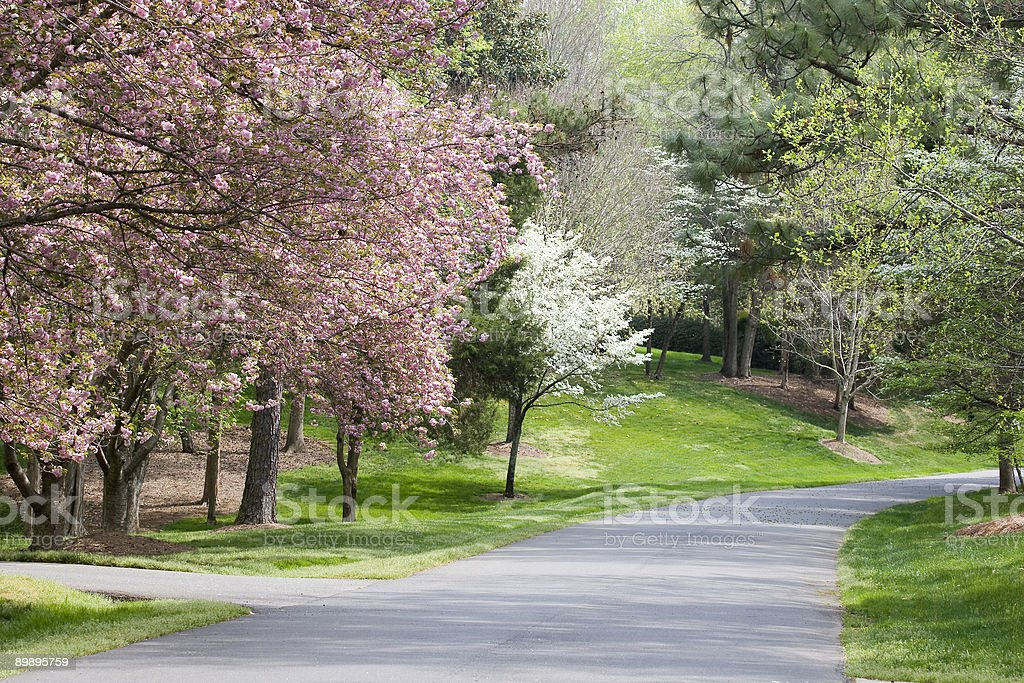 A long driveway surrounded by spring trees stock photo
