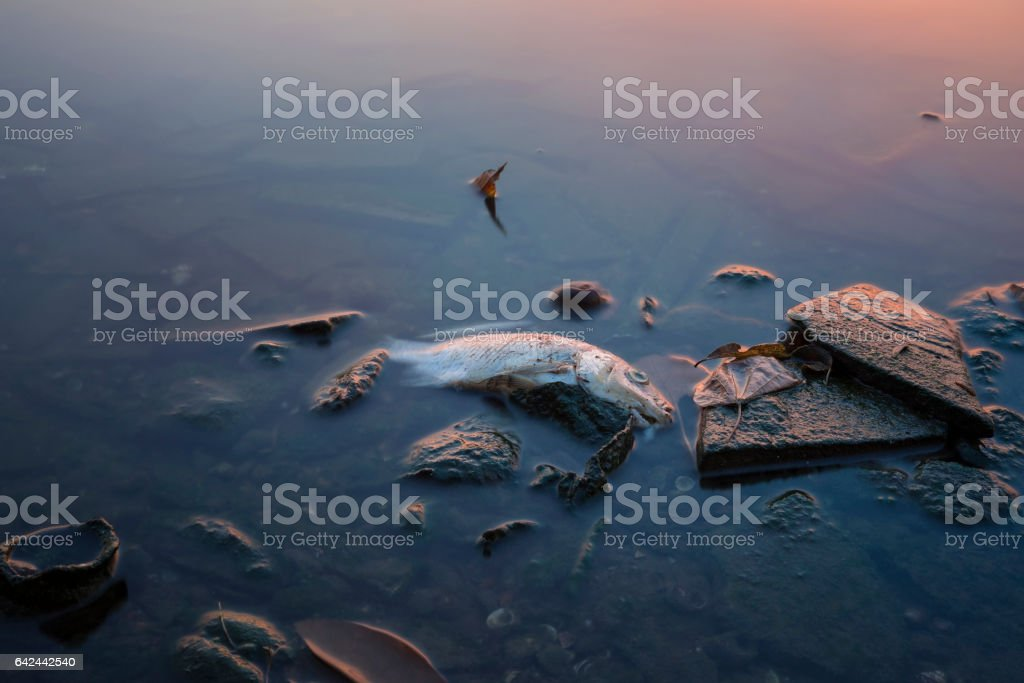 Long exposure of dead fish on lake in Asia stock photo
