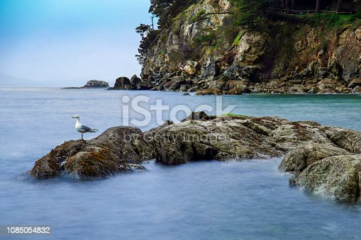Long exposure of the water in Larrabee Bay with a seagull on the rocks in Bellingham, WA