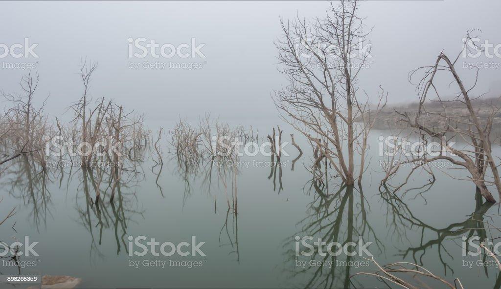Long Exposure of White Trees on Lake with Dense Fog stock photo