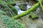 Long exposure photo: small waterfall in flowing motion with mossy tree trunk as a bridge to cross the river, the scene is colored in strong green and beautiful blue, during the day, in cloudy weather, fairy tale atmosphere