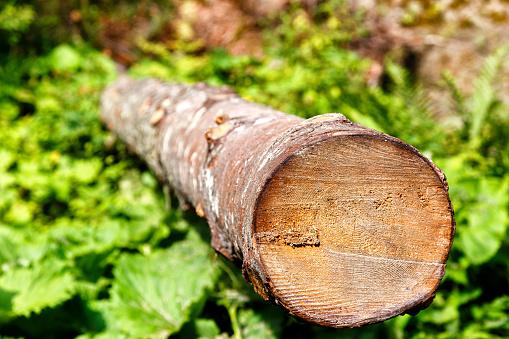 Long felled log lying on the green grass