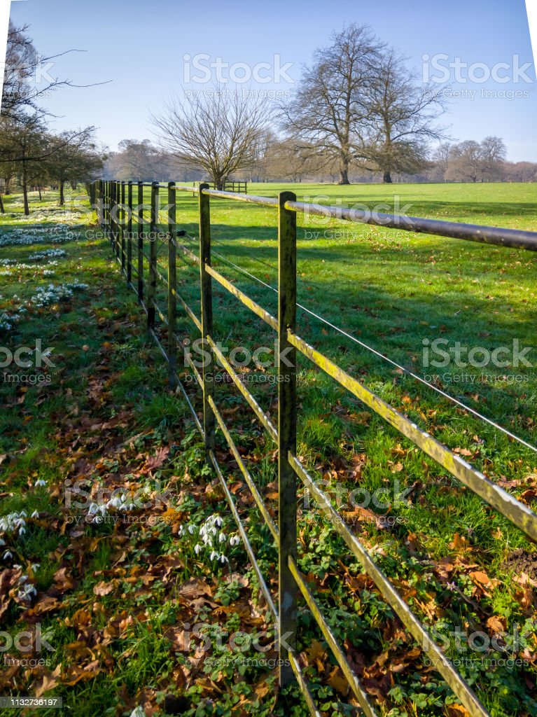 Long fence by a field with snowdrops stock photo