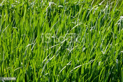 A full frame of long grass catching the sun on a summer day.
