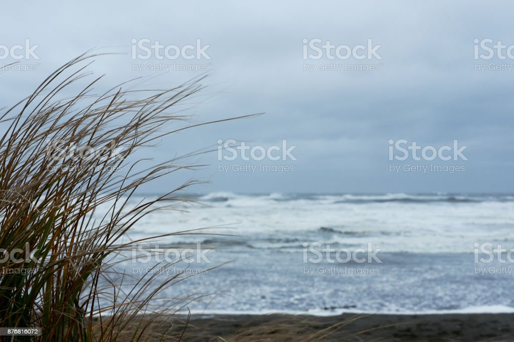 Long grass on a beach in front of a stormy ocean stock photo