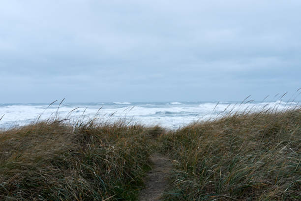 Long grass on a beach in front of a stormy ocean with a path stock photo
