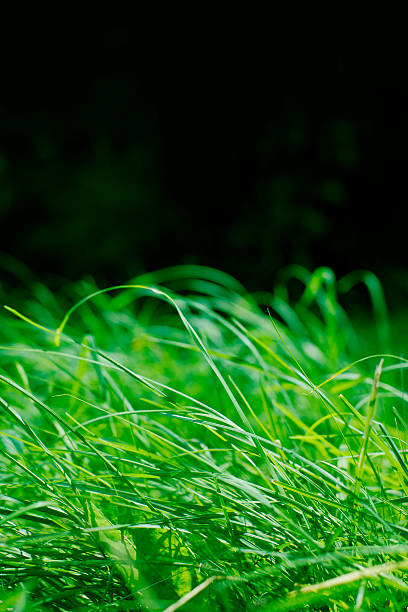Long Grass stock photo