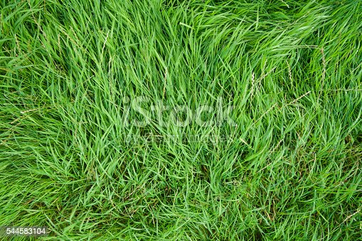 Long grass swept by the wind