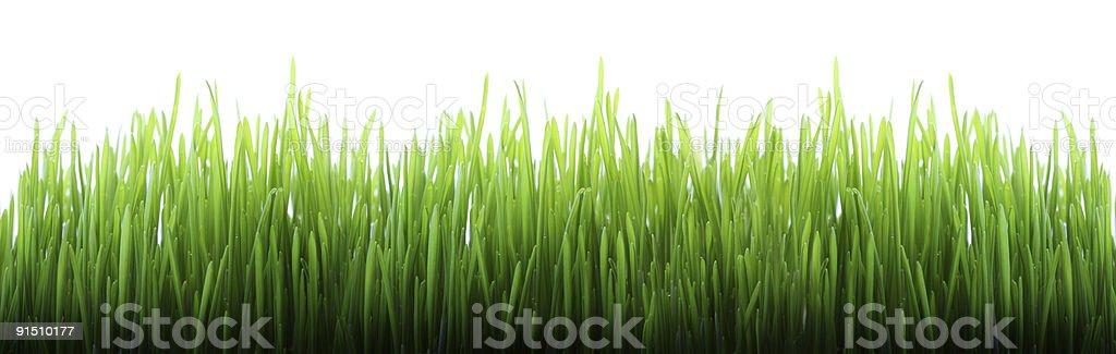 Long grass royalty-free stock photo