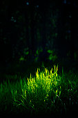 Sun spot light on the green long grass, black shadow of the environment can be used as copy space.