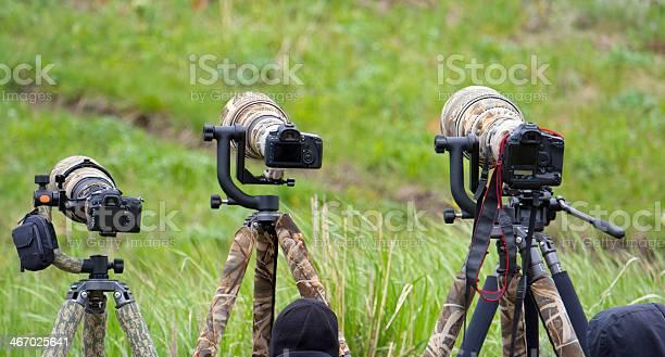 Long Lenses On Dslr Wildlife Photographers Stock Photo Download Image Now Istock