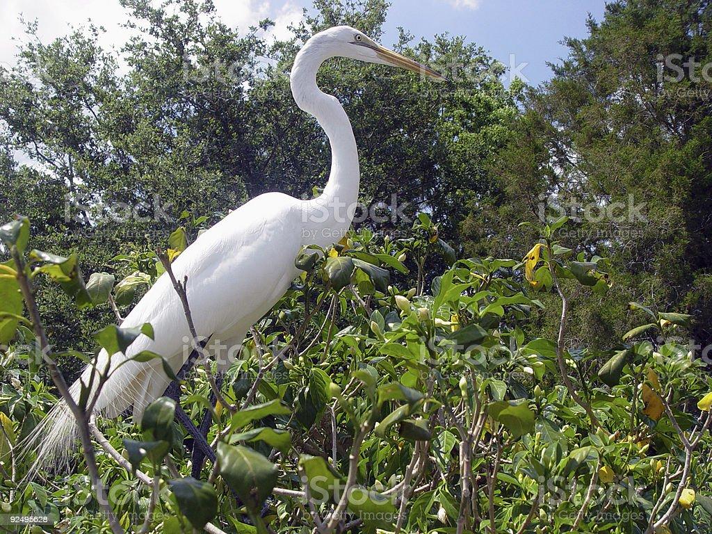 long necked bird royalty-free stock photo