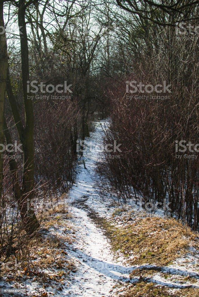 Uzun yolu kış orman içine beyaz karla kaplı royalty-free stock photo