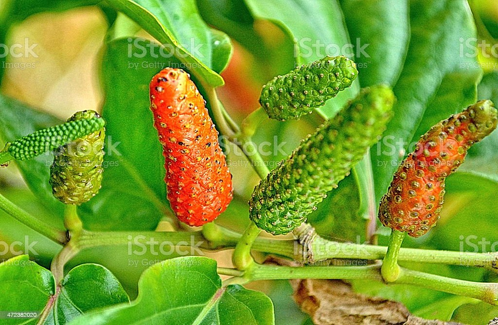 long pepper stock photo