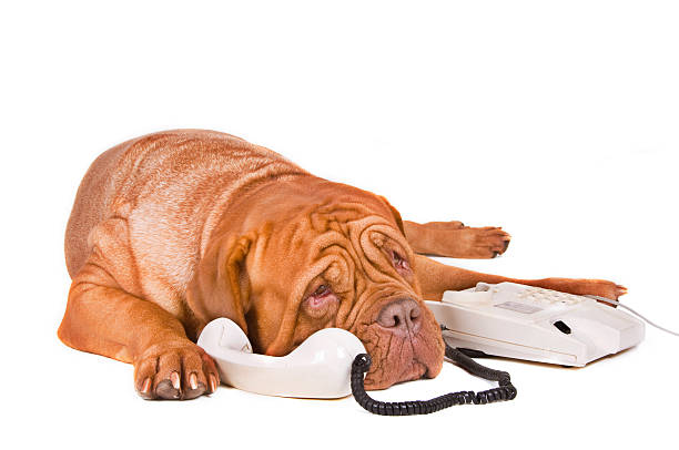 Long Phone Call  animal call stock pictures, royalty-free photos & images