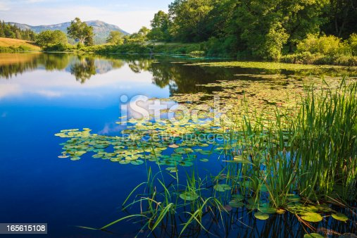 the peaceful summer morning light on Long Pond in Maine