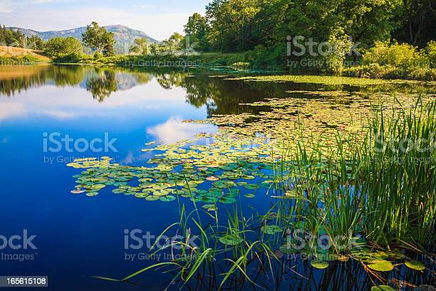 Photo of Long Pond, Maine, deep blue water lake, lily pads, grasses