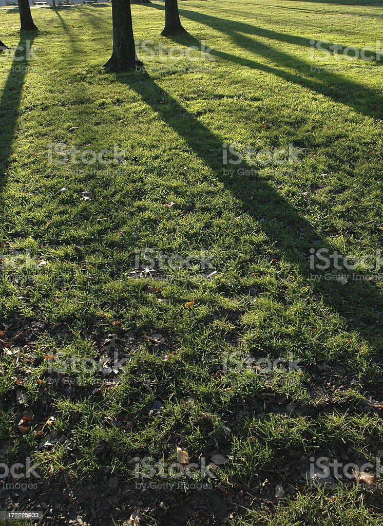 Long Shadows in Grass royalty-free stock photo