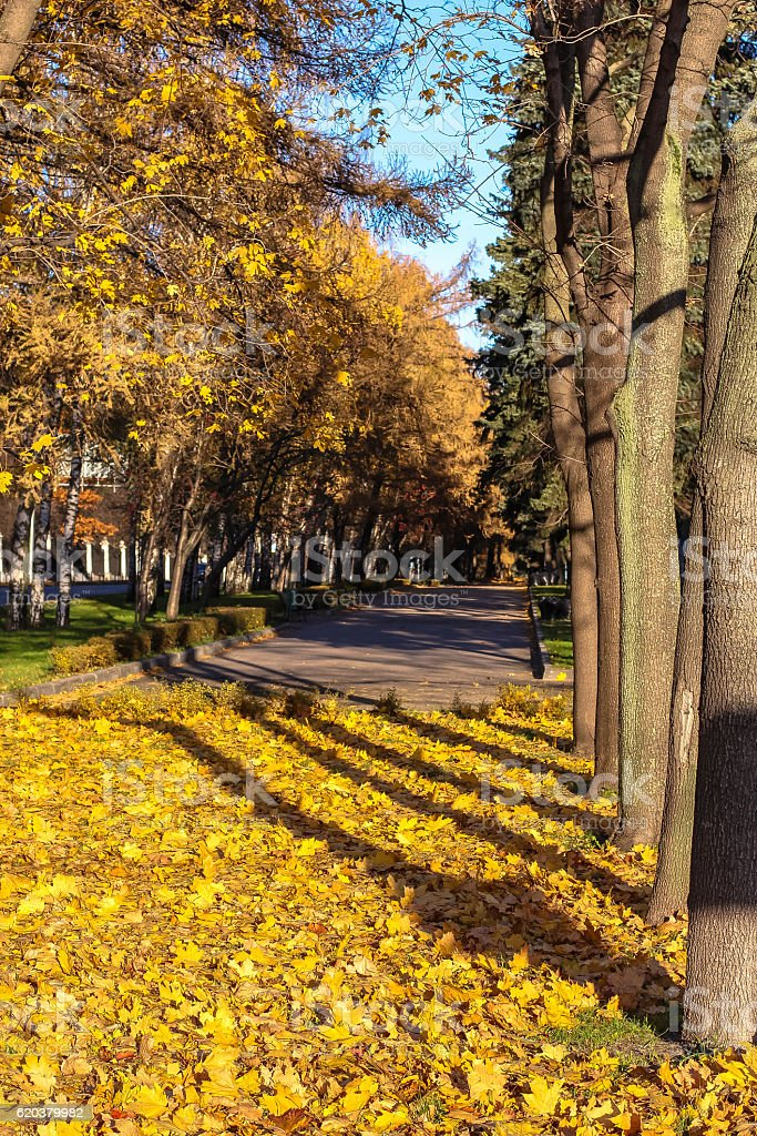 Long shadows of autumn trees of city alley in Moscow zbiór zdjęć royalty-free