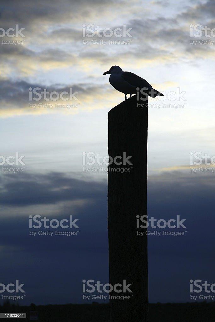 Long Shore Bird royalty-free stock photo