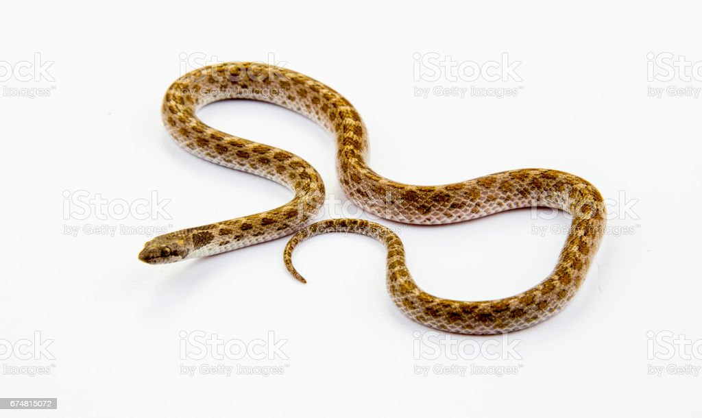 A Long Snake stock photo