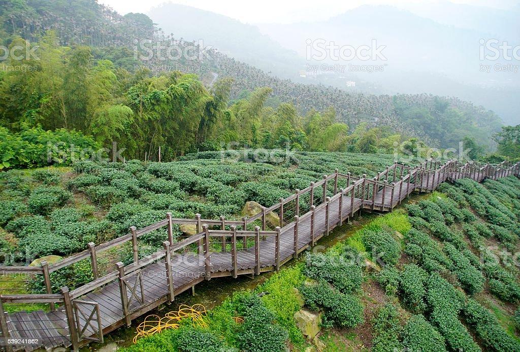 Largo escalera de turista en el bosque foto de stock libre de derechos