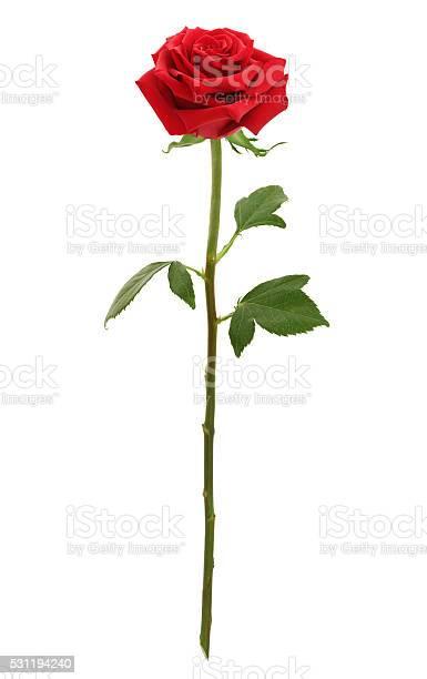 Long stem red rose picture id531194240?b=1&k=6&m=531194240&s=612x612&h=wgeitlfujpv2 uiwuapd3asutoq52m5la cdbqfkiew=
