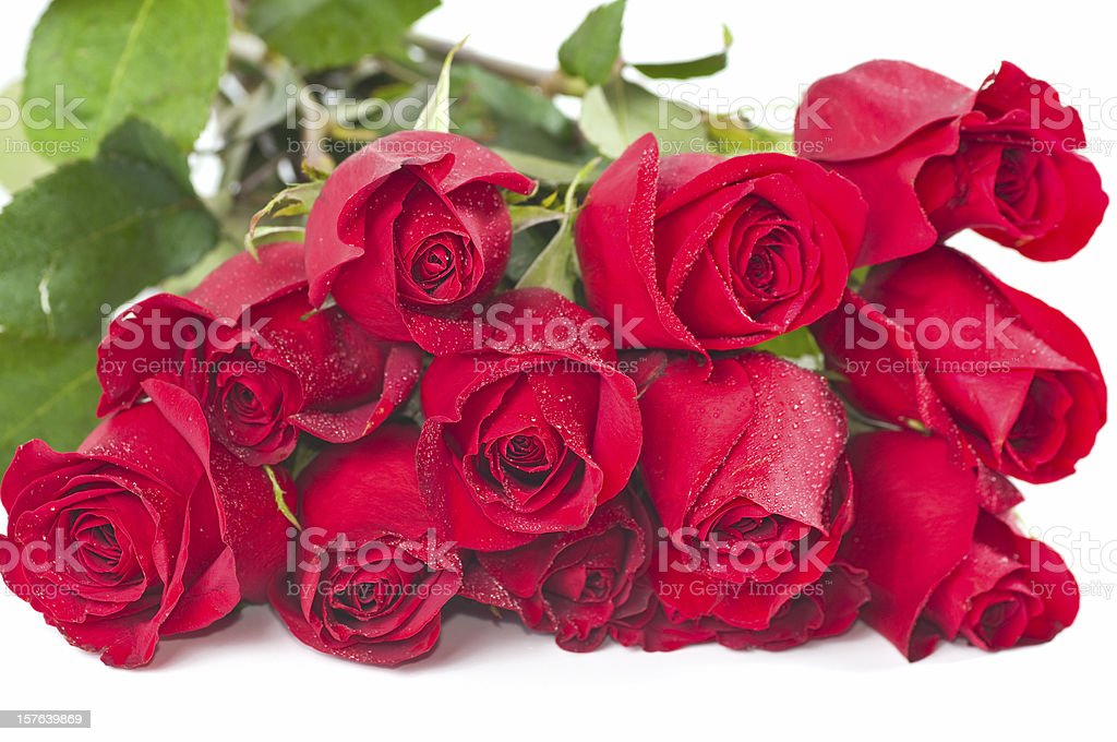 Long Stem Red Roses stock photo