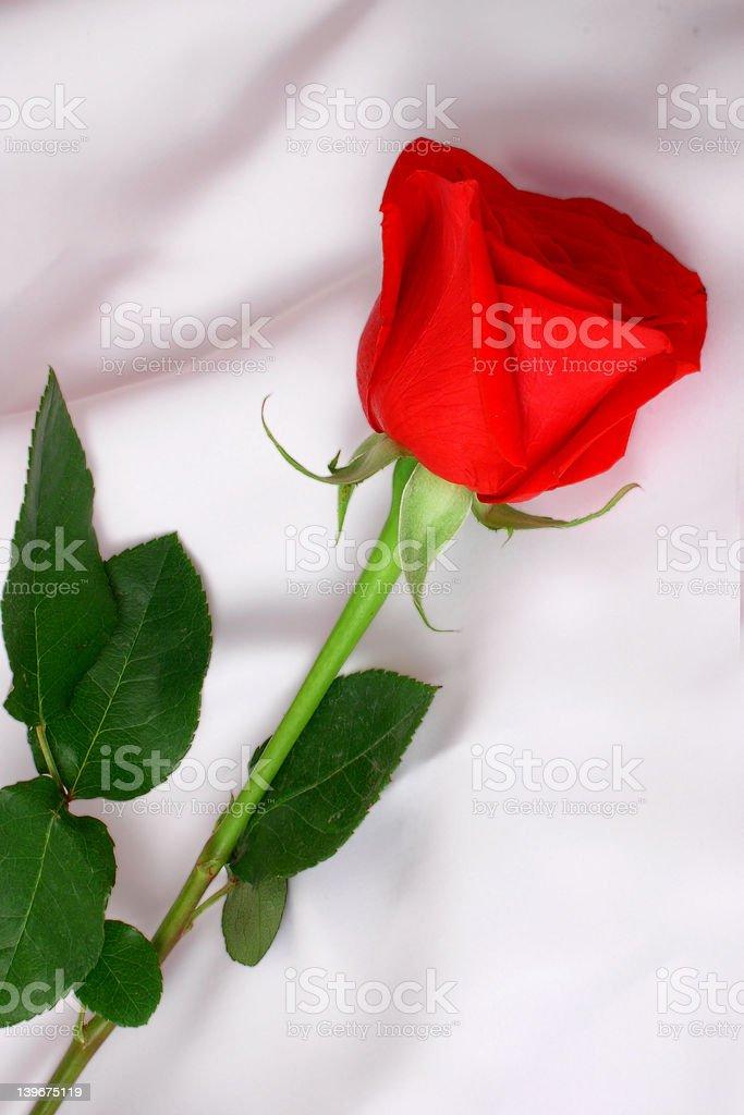 Long Stemmed Red Rose On White Silky Material stock photo