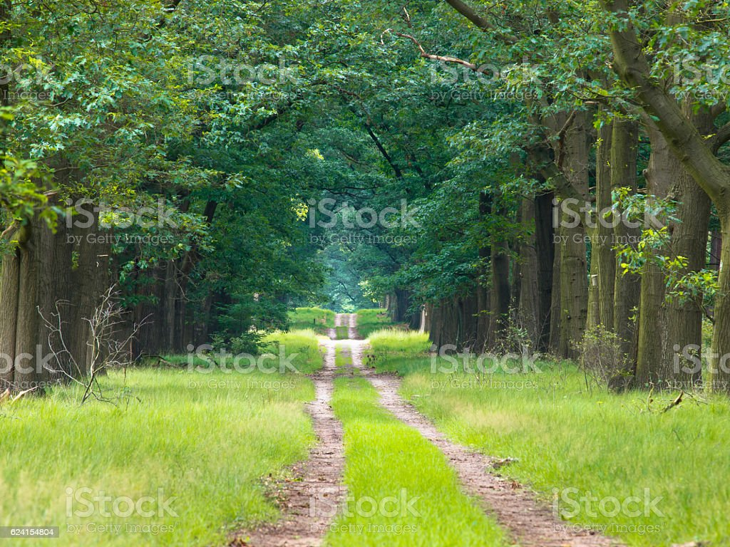 Long straight forest lane dissapearing on the horizon stock photo