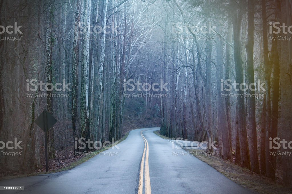 Long Street Photography in the Deep Woods with Colorful Rays of Sunshine Lights stock photo