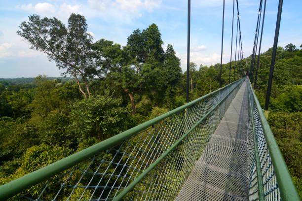 Long suspension bridge treetop walk near MacRitchie Reservoir in Singapore stock photo