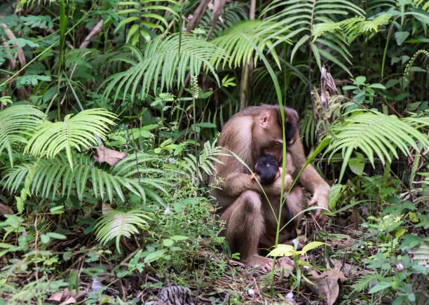 Lange Schwanz Makaken Mutter mit Baby – Foto